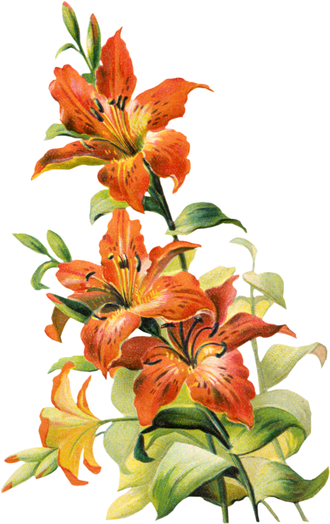 free clip art lily flowers - photo #27